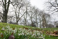 Volunteering Opportunity Kensington Gardens